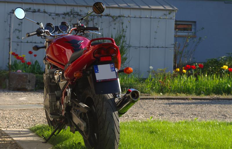 Suzuki Bandit 600N, il était temps bis... 186179IMGP2467