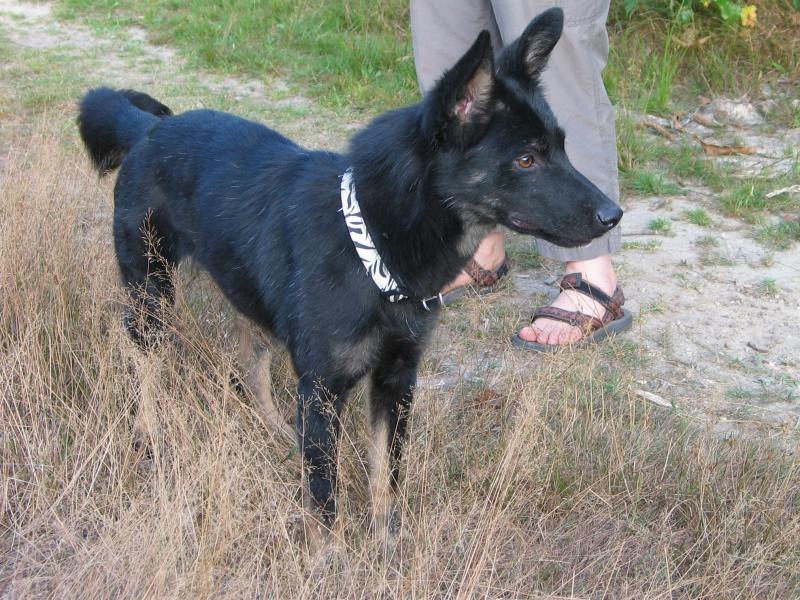 > Mika, un amour de petite chienne, née en mai 2011 - Adoptée 186877IMG0020