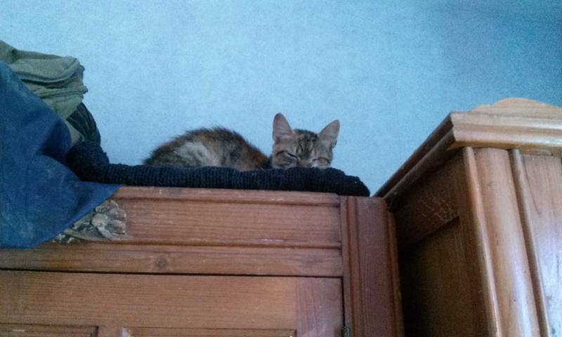 DUCHESSE - chatte femelle, née 2011/2012, borgne - (PASCANI) - adoptée par Chantal Pascal (dpt 63) - Page 3 1984386925