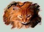 ~~ Destiny cat ~~ ( La guerre des clans ) 200747761151_15