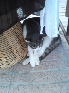 Essaouira.... 20091720120816191136