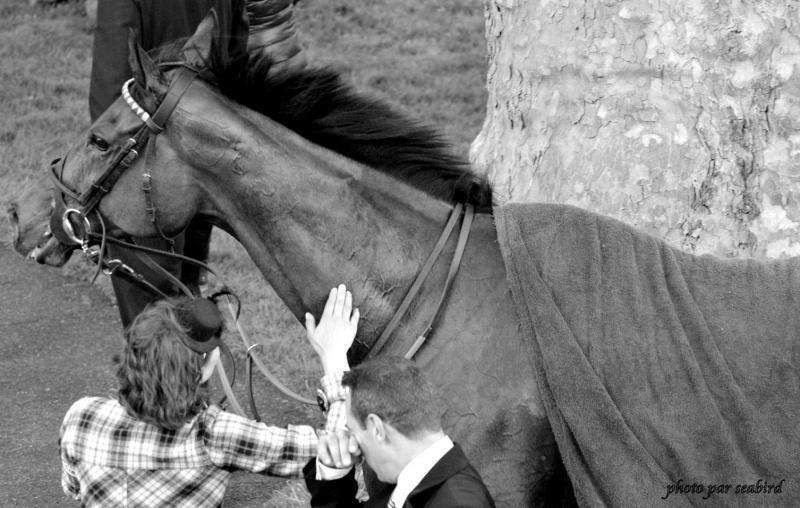 Prix Ganay 2014 (Gr. I, Longchamp) 27-04 : Cirrus des Aigles (+photos) 201189280001