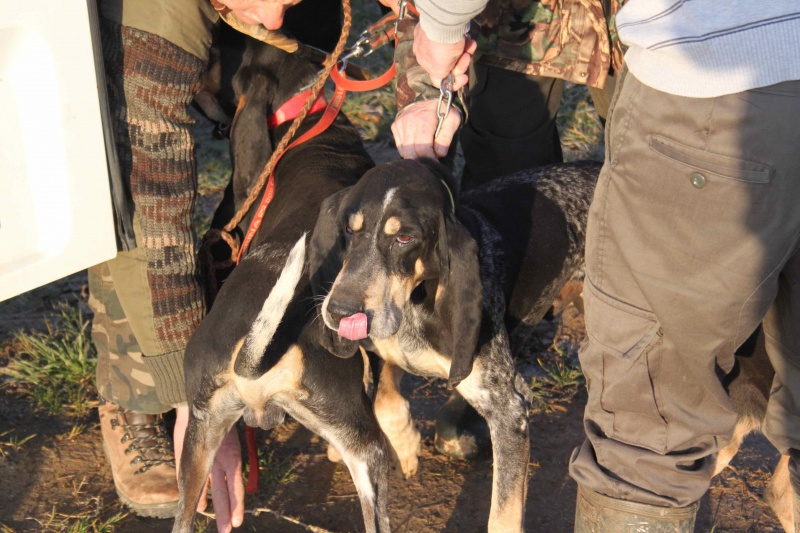 Brevet de chasse sur lièvre Marnay (71) 7 et 8 mars 2015 202079IMG6494