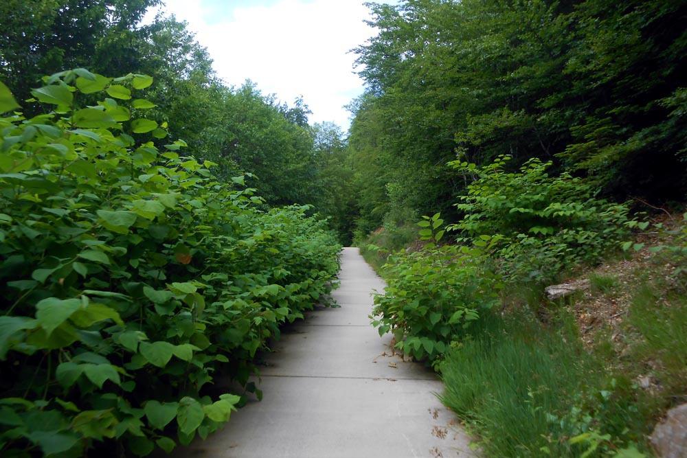 Fête du vélo dans les Vosges le 31 Mai 2015 203855DSCN7387