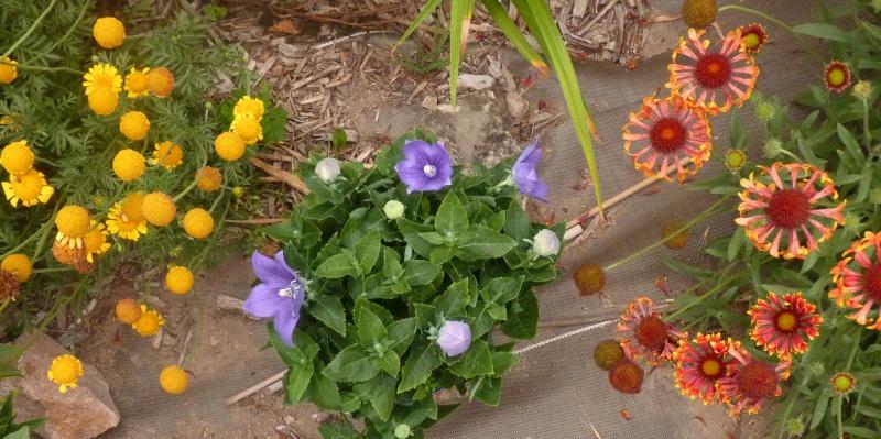 les plantes que je propose 203873P1090763