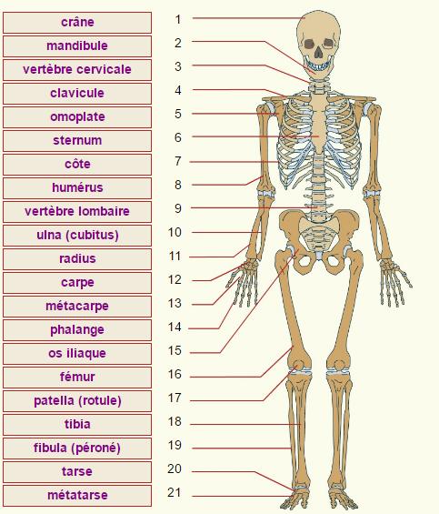 Guide RP du CHU - Page 3 204529Squelette