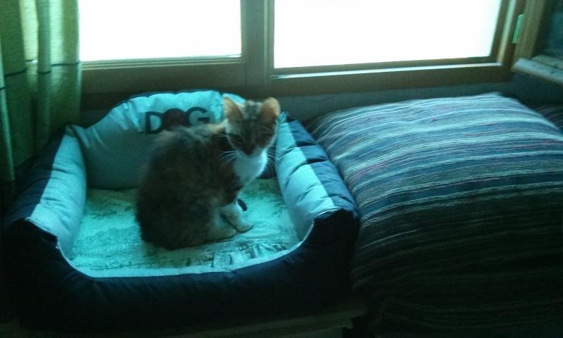 DUCHESSE - chatte femelle, née 2011/2012, borgne - (PASCANI) - adoptée par Chantal Pascal (dpt 63) - Page 3 2081929721