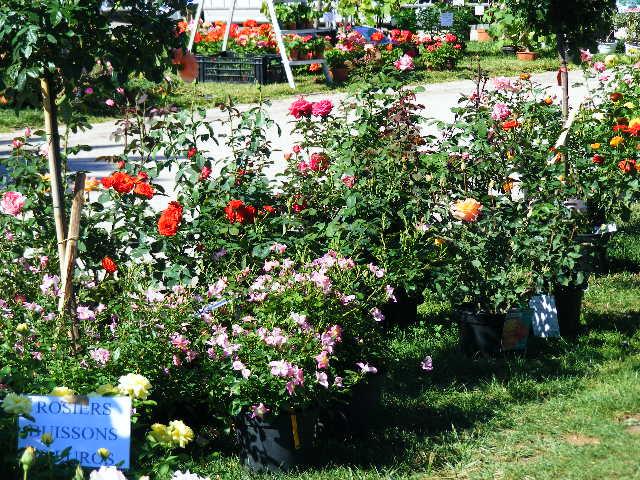 Balade à Menton le 12/09/2010. 209082expo_jardin__12.09.2010._005