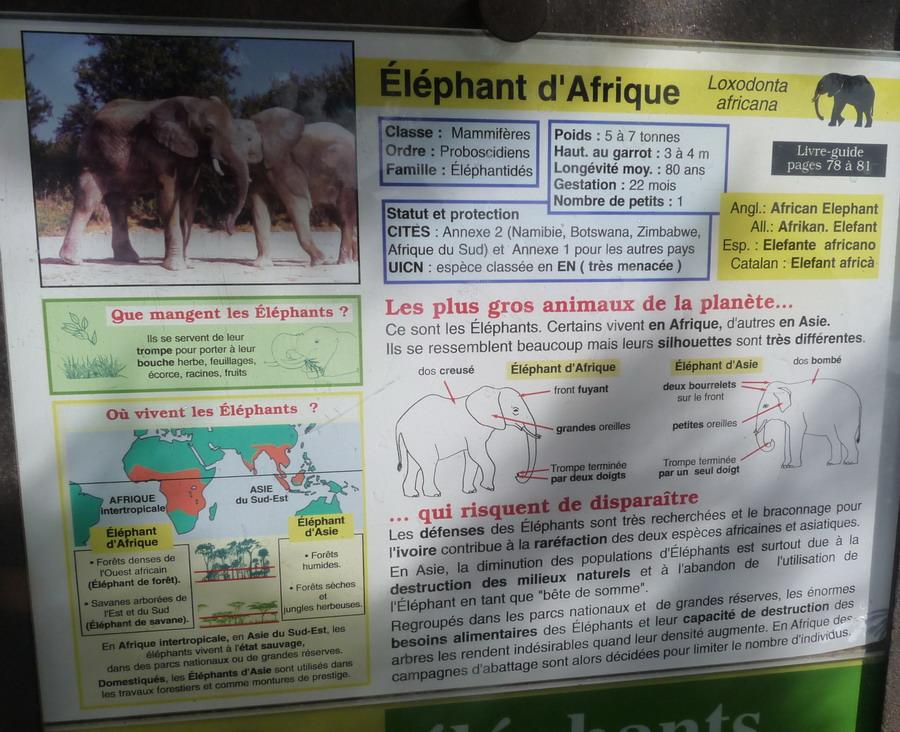 """NARBONNE EN PASSANT PAR LA RESERVE AFRICAINE DE SIGEAN C"""" EST  DROLEMENT FUN - Page 4 210224P1180316"""
