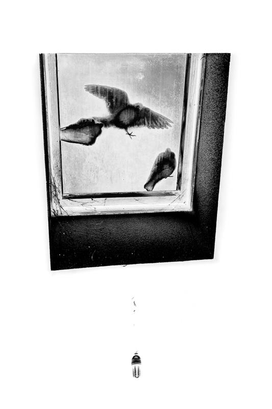 Three little birds + ajout 210458paifvelux1