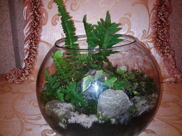2.Les Terrariums...et pêtite corbeille de lierre 214578Photo013