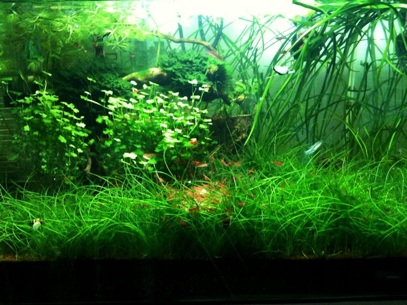 Mon Scaper's Tank 50L Aquascaping - Page 9 216461IMG0861