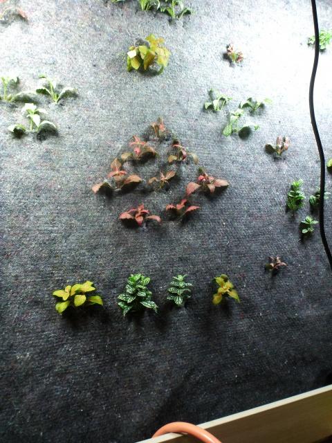 Le nouveau mur végétal de Olivetzou (projet fini à 98%) enfin les leds - Page 2 217835P1010084