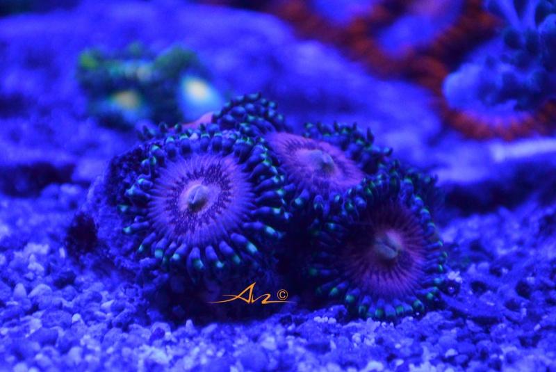 Mon premier aquarium eau de mer - Page 4 218182Zozopinkzipper