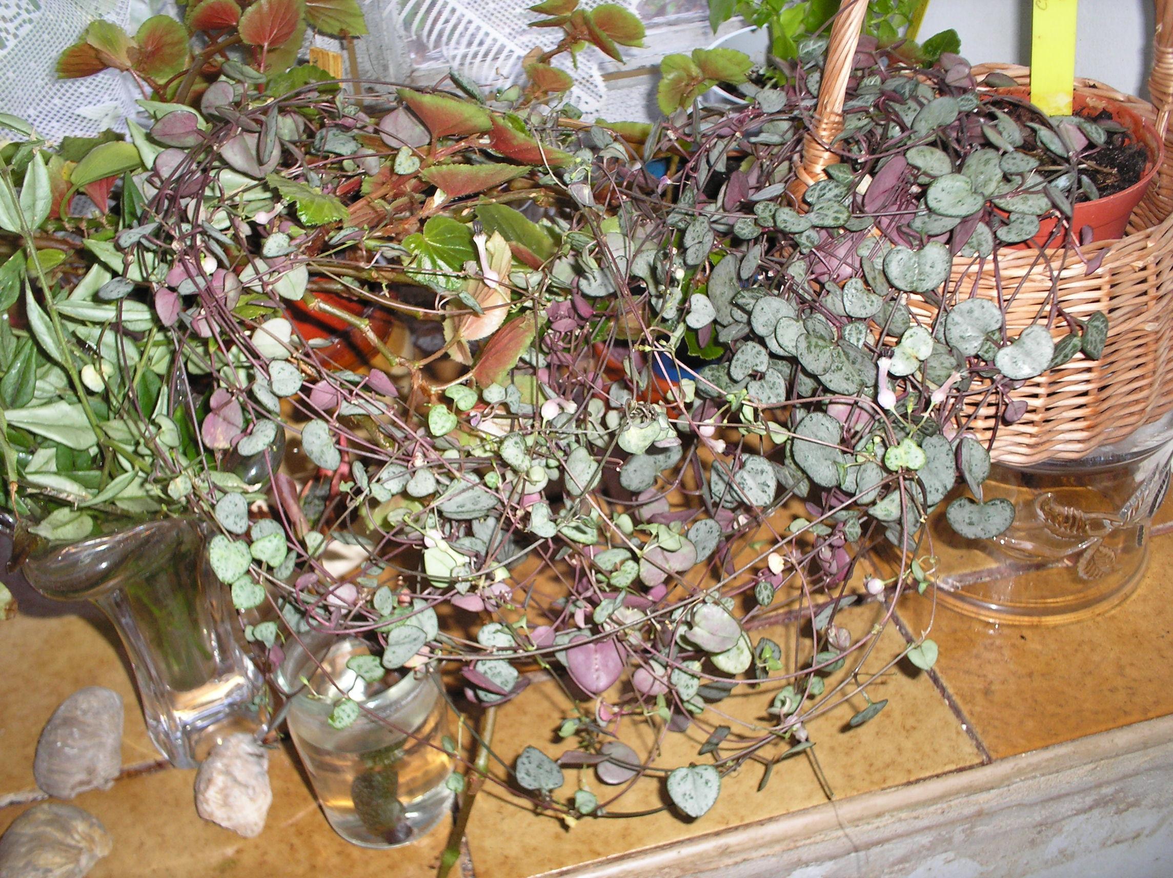 Zolia's collection (petite) 218370P8202416