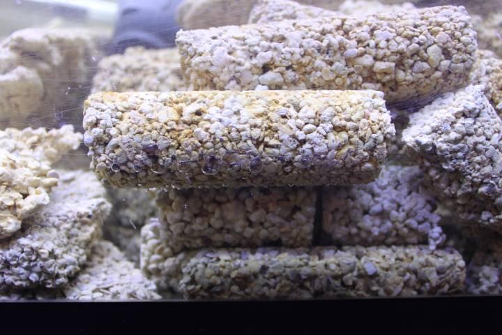 réalisation de pierres artificielle pour récifale 218842PXR_IMG_0027
