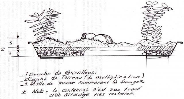 2.Les Terrariums...et pêtite corbeille de lierre 219026ter5