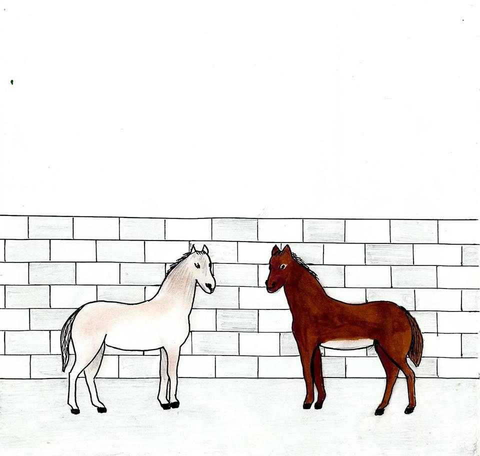 الحصان والسوط / محمد ابراهيم بوعلو 221613117455001615020955382262963357980911522900n