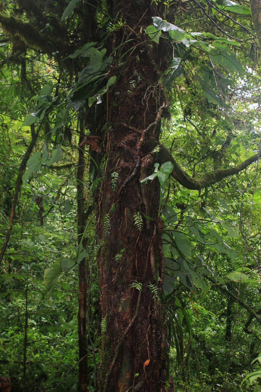 15 jours dans la jungle du Costa Rica - Page 2 221648monte1
