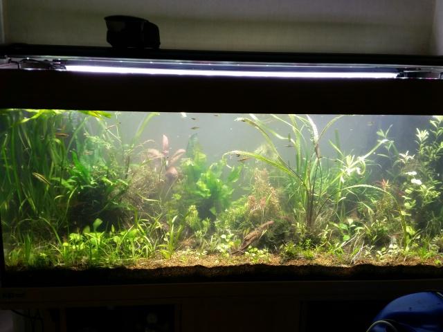 Mes (plus) de 60 plantes dans mon 240 litres - Page 5 22580320140823131759