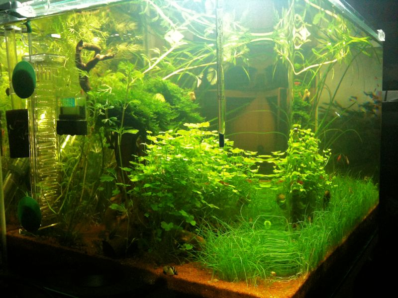 Mon Scaper's Tank 50L Aquascaping - Page 2 228933IMG0697