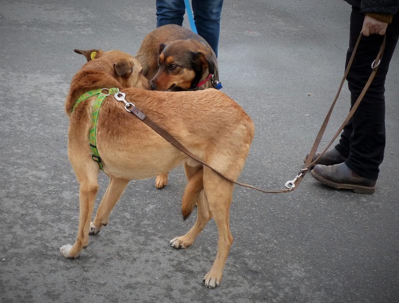 Tzupy, chien de notre quartier, mâle très sociable, né en 2009. 229650P1130279