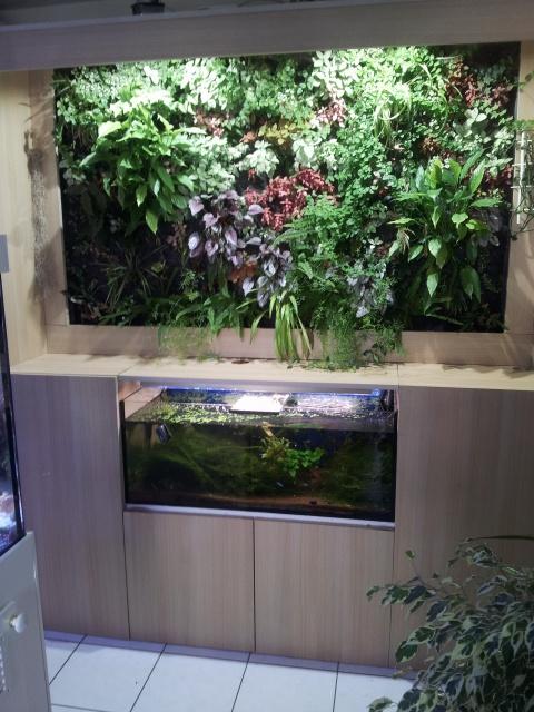 Le nouveau mur végétal de Olivetzou (projet fini à 98%) enfin les leds - Page 3 23076220130823144046