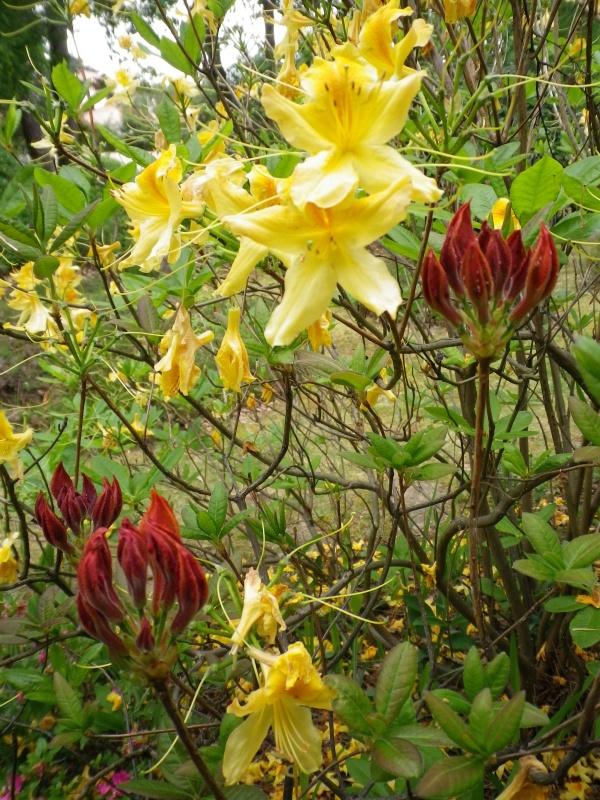 joli mois de mai, le jardin fait à son gré - Page 4 233191IMGP4585