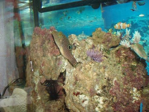 agressivité des poissons 233295PB300010