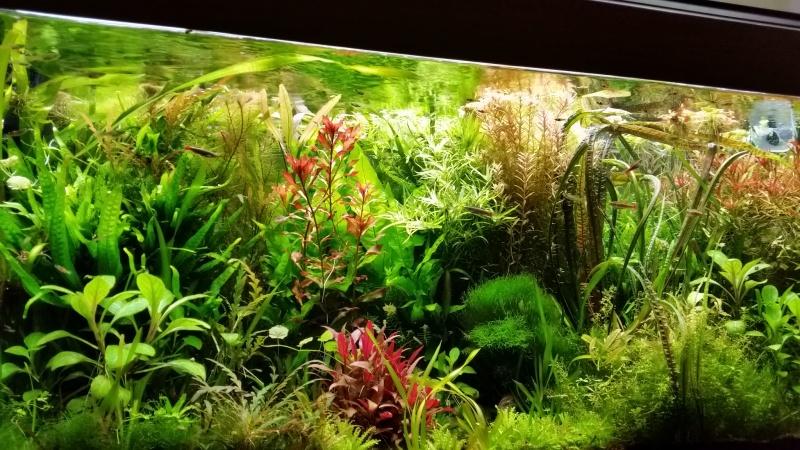 Mes (plus) de 60 plantes dans mon 240 litres - Page 6 23644820141230075145