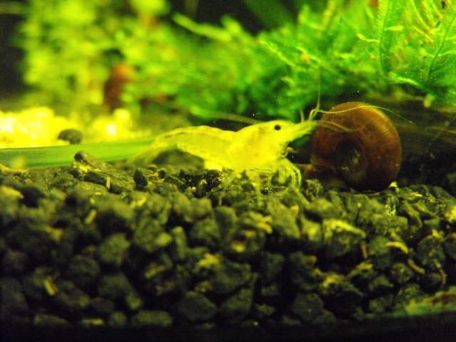 mes aquariums 240691DSCF6189