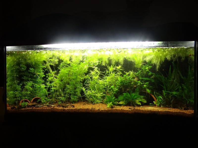 Projet d'un aquarium spécifique  242531DSC06545