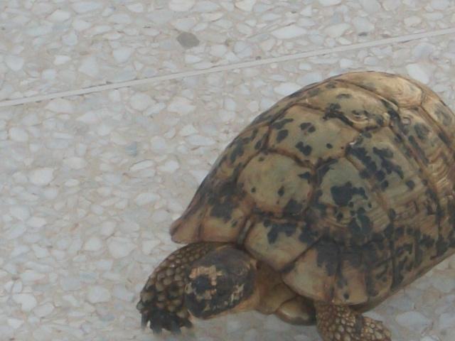 nouvelle tortue ! 243001DSCF1304