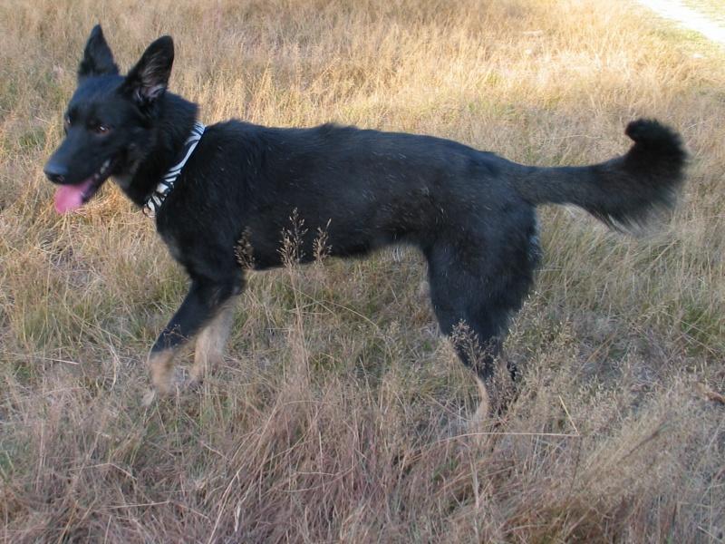 > Mika, un amour de petite chienne, née en mai 2011 - Adoptée 244475IMG0018