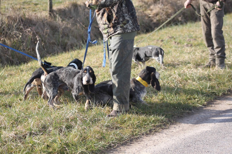 Brevet de chasse sur lièvre Marnay (71) 7 et 8 mars 2015 245470IMG6520