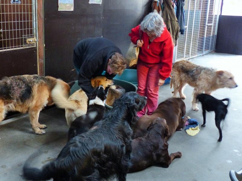 Pongo, chien des rues, né en 2009, très affectueux !! 249188P1080424