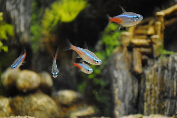 Mon premier aquarium 255212DSC0071Copie