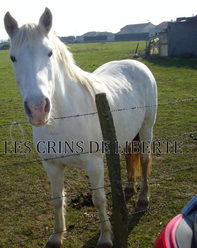 (Dept 63) ELSA, Camargue, 5 ans, sauvée par Michel!!!!!!!!!!! (Janv 2012) - Page 2 262800108