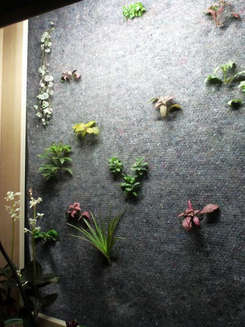 Le nouveau mur végétal de Olivetzou (projet fini à 98%) enfin les leds - Page 2 267711P1010081