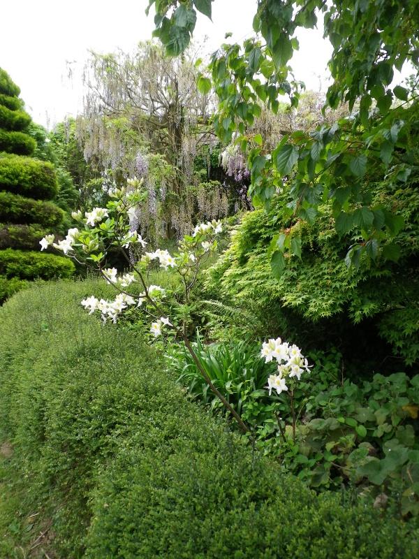 (40) Plantarium et chemin de ronde - Gaujacq - Page 2 269281IMGP4519