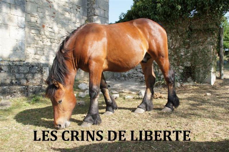63- Acajou (décédé) et Vanille, comtois, sauvés par Nathalie B.!!!!!!!! (Mars 2012) 270936ACAJOU