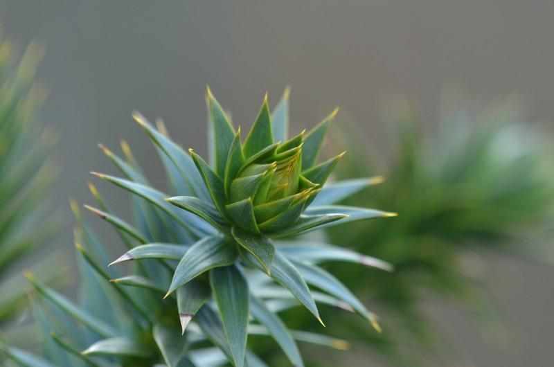 les plantes qui pic 271274034