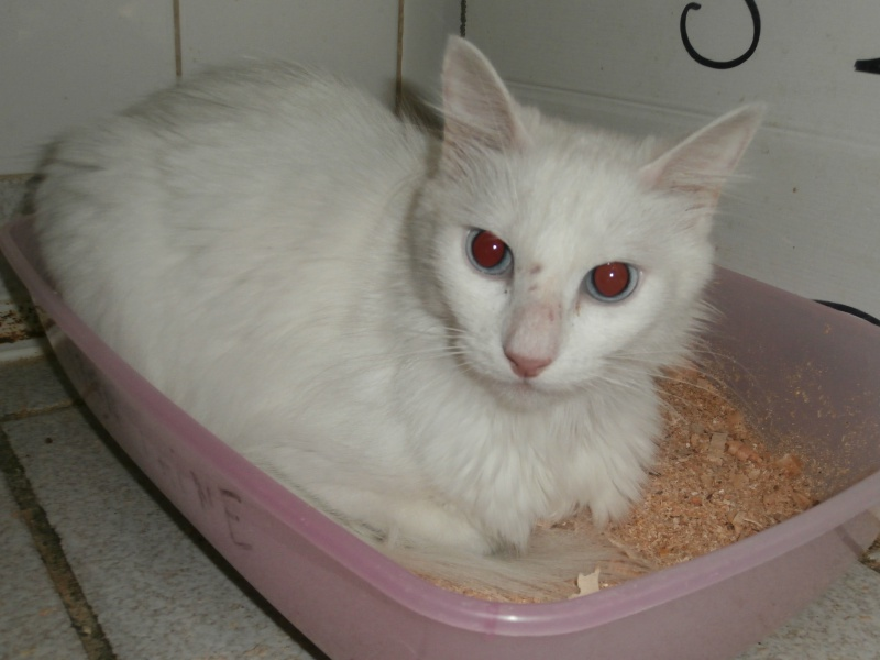 SNOW (chatte blanche) 273543P8201624