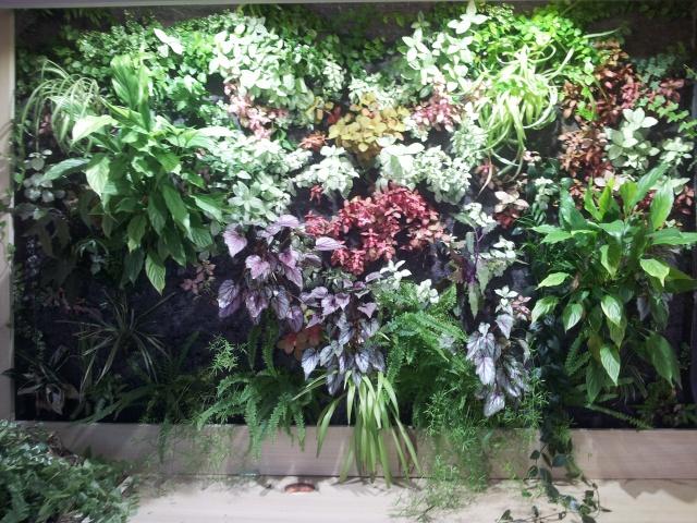Le nouveau mur végétal de Olivetzou (projet fini à 98%) enfin les leds - Page 4 27748320130823145544