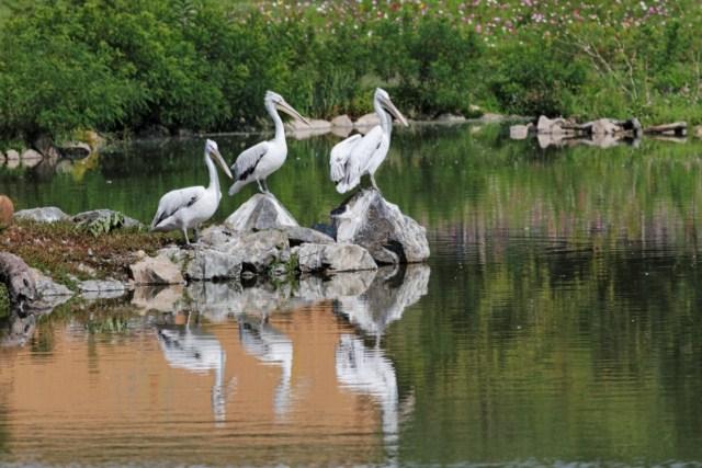 Zoo du Pal (Allier: Dompierre sur Besbre) 280688IMG_5920_DxO__640x480_