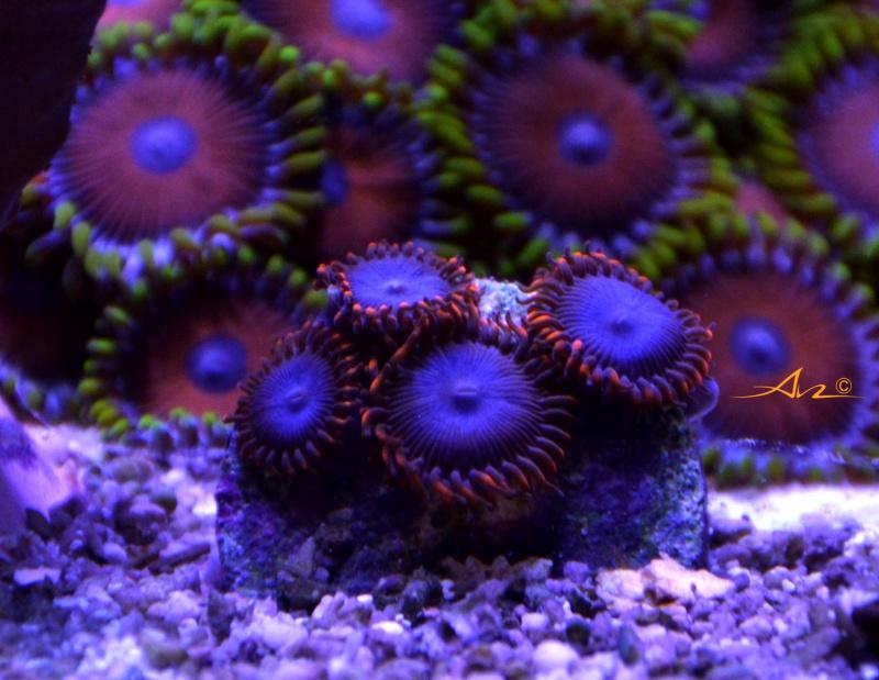 Mon premier aquarium eau de mer - Page 4 280719ZOZOspiderrouge