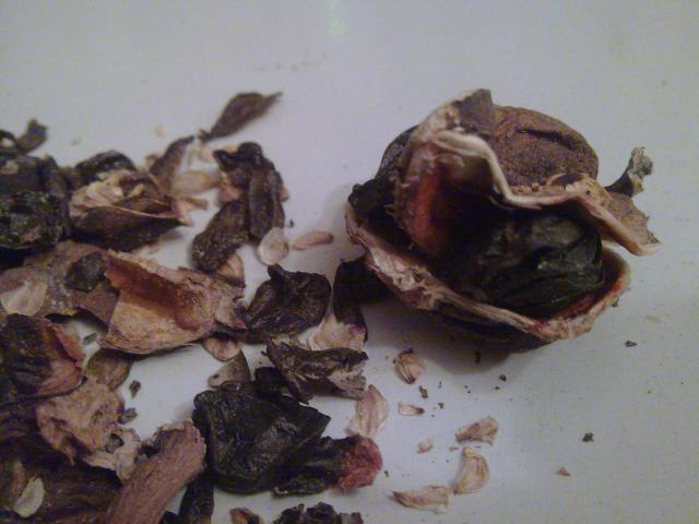 Amaryllis (hippeastrum) -culture, entretien, floraison 281929Photo034