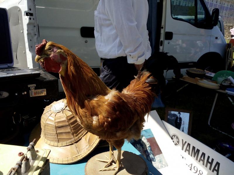 Bourse - expo à St Yrieix la Perche (87) 288697STYRIEIX098