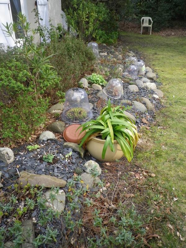 Ma rocaille ...... et mes grassouillettes 293381IMGP3891