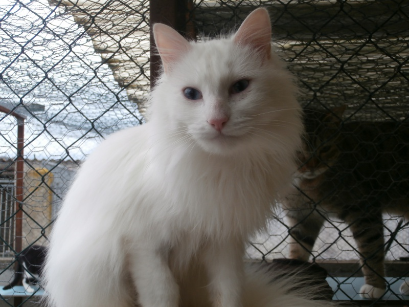 SNOW (chatte blanche) 295224PC131821